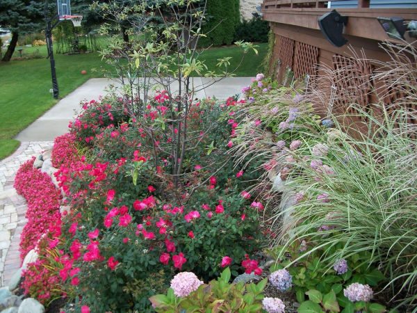 plantings and landscape design
